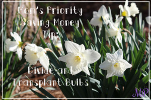 Mom's Priority Saving Money TIp: Divide and Transplant Bulbs