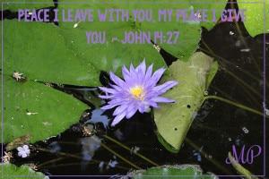 Peace I leave with you, my peace I give you. - John 14:27